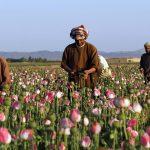 Narcostate Paling Baru: Afghanistan di Bawah Taliban